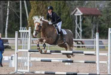 Fredrika är en pigg och glad hästskötare och ridinstruktör från Sjundeå. Hon talar svenska, finska, engelska och litet tyska. Hon är utbildad från Ypäjä 2017.